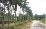 Hương cau quê ngoại