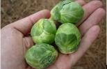 Cảnh báo nguy hiểm việc nở rộ các hạt giống lạ