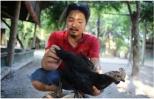 Hành trình đưa giống gà đắt nhất thế giới về Việt Nam
