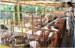 Máy móc, thiết bị nông nghiệp không chịu thuế GTGT