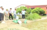 Chủ tịch UBND tỉnh kiểm tra sản xuất nông nghiệp tại Ân Thi