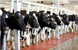 Hai đại gia hợp tác nuôi bò, chế biến sữa, trồng đậu nành