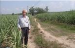 Chiêu cải tạo đất lạ kỳ của lão nông Tây Ninh