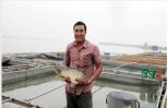 Kỹ nghệ nuôi cá giòn trên sông Hồng