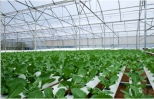 Chi vài chục tỷ đồng trồng rau sạch ăn ngay tại vườn