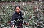 Nông dân trồng hoa mang cả trăm triệu từ đồng về nhà