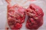 Bệnh nấm phổi trên gia cầm và cách phòng trị