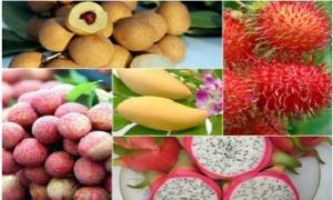Những trái ngon đất Việt đắt hàng... xuất ngoại