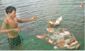 Kỹ thuật nuôi thủy sản