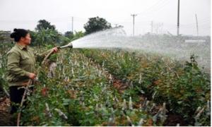 Thu nhập của nông dân tăng gần gấp đôi