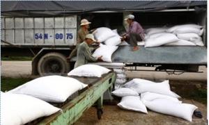 Cần linh hoạt trong điều hành xuất khẩu gạo