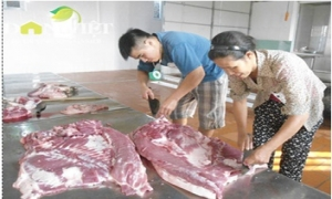 Sản xuất thịt sạch, đầu ra hanh thông