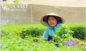 Khan hiếm sản phẩm nông sản hữu cơ