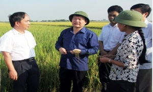 Chủ tịch UBND tỉnh Nguyễn Văn Phóng kiểm tra sản xuất nông nghiệp