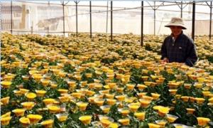 Sẽ có chính sách toàn diện thu hút đầu tư vào nông nghiệp