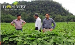 Sẽ có 900.000ha trồng rau an toàn