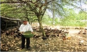 Nuôi gà thả vườn thu lãi trên 200 triệu đồng/năm