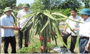 Tăng cung cấp thông tin và phản ánh trăn trở của nông dân