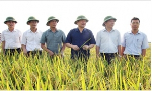 Chủ tịch UBND tỉnh Nguyễn Văn Phóng kiểm tra, chỉ đạo sản xuất nông nghiệp