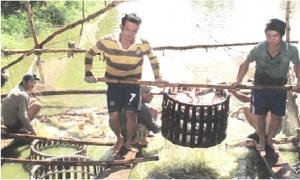 Mô hình nuôi cá tra VietGAP đầy triển vọng