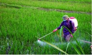 Hơn 53% thuốc trừ sâu nhập khẩu từ Trung Quốc