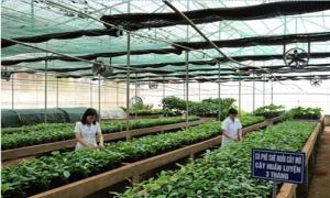 Nông nghiệp có thể tăng trưởng cao trong năm nay