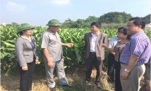 Hỗ trợ hơn 1,1 nghìn lao động nông thôn học nghề phi nông nghiệp 100%