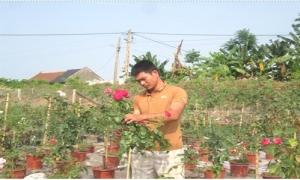 8X trồng hoa hồng các loại thu tiền tỷ mỗi năm