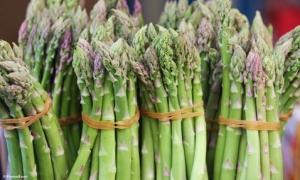 Lãi 3 triệu đồng/ngày nhờ trồng măng tây xanh