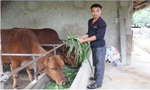 Lợn rẻ chuyển sang nuôi cá giống, thu hơn 10 triệu đồng/tháng
