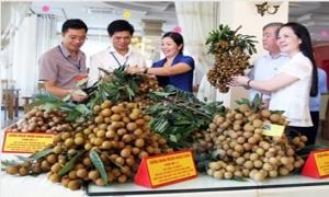 Nâng cao sức cạnh tranh cho sản phẩm nông nghiệp Khoái Châu