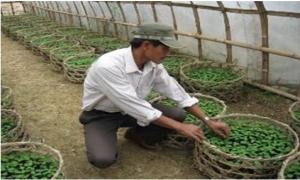Sản xuất rau giống trên khay nhựa hoặc vỉ xốp