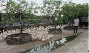 Cả thôn ấp trứng vịt lộn thu gần 200 tỷ đồng/năm ở thành phố Hưng Yên