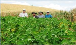 Giống đậu tương chịu hạn DT2008 thích nghi nhiều vùng đất