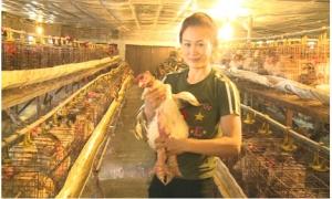 Nông dân 8x ở Khoái Châu thu 700 triệu mỗi năm từ thụ tinh nhân tạo giống gà Đông Tảo