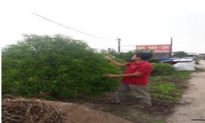 Mạnh dạn chuyển đổi cơ cấu cây trồng đem lại hiệu quả kinh tế cao