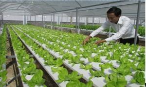 8X bỏ lương 25 triệu/tháng, về làm mô hình vườn rau nhà phố