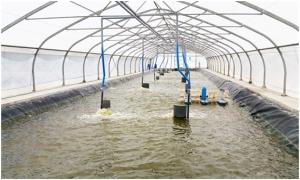 Neovia Việt Nam tư vấn trực tuyến trên Zalo cho người nuôi thủy sản
