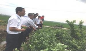 Hội nông dân huyện Yên Mỹ tổ chức hội nghị triển khai và tập huấn mô hình trồng và chăm sóc Hoa Nhài.