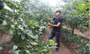 Đa dạng hóa các hình thức khích lệ nông dân thi đua sản xuất kinh doanh giỏi