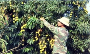 Tập trung phát triển thế mạnh, nâng cao đời sống cho hội viên nông dân.