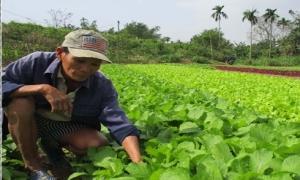 Làm giàu ở nông thôn: Chỉ trồng rau thôi tôi lãi 30 triệu/tháng