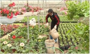 Văn Giang thu trên 300 tỷ đồng từ trồng hoa, cây cảnh